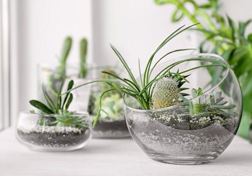 Austin Flower Plant Care Freytags Florist