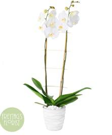 White Orchids & Bamboo Garden