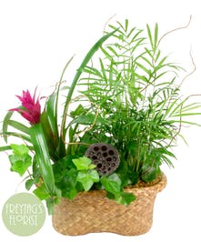 Summer Tropical Basket Garden with Green and Blooming Plants