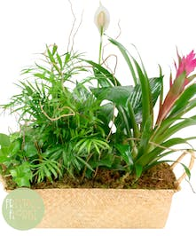 Deluxe Summer Tropical Basket Garden with Green and Blooming Plants