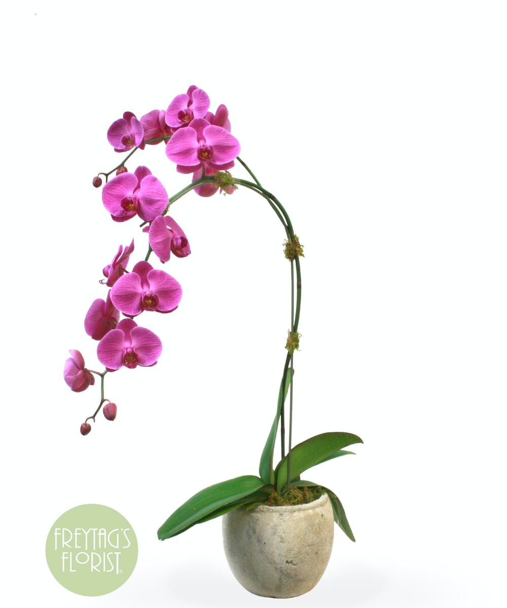Purple Orchids In Austin Texas Freytags Florist