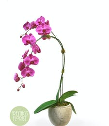 Modern Purple Orchid