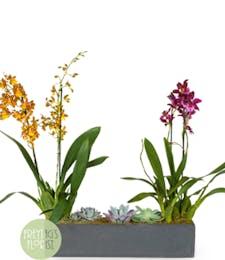 Deluxe Slate Orchid & Succulent Garden