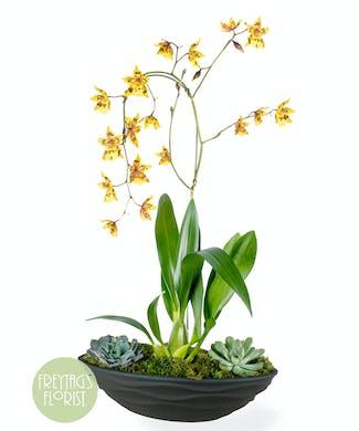 Modern Orchid & Succulent Garden