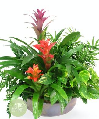 Tropic Bromeliad Garden