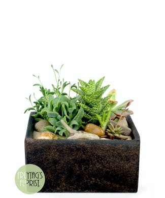 Modern Stone Succulent Garden