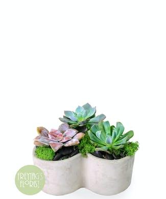 Succulent Trifecto