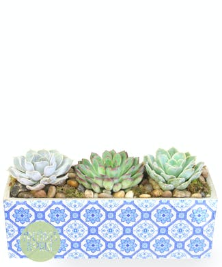 Mosaic Succulents Deluxe