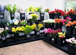 A wide range of colorful floral arrangements, awaiting their new home